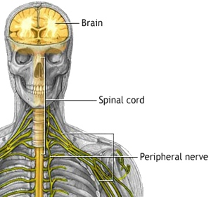 Paraneoplastic syndromes are caused by the body's own immune system response to fighting cancer.  A neurological syndrome can affect the brain and/or spinal cord and/or the peripheral nervous system.